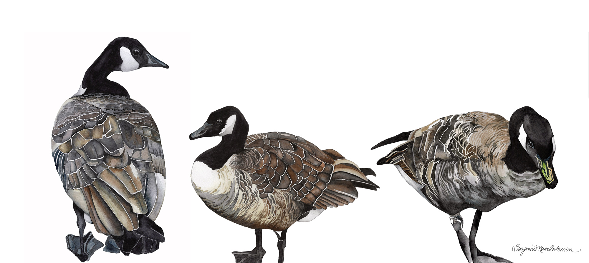 Canadian Geese-mockup-2000