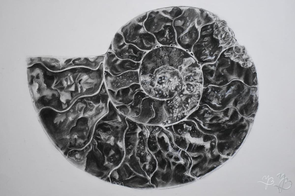 Ammonite, Carbon dust