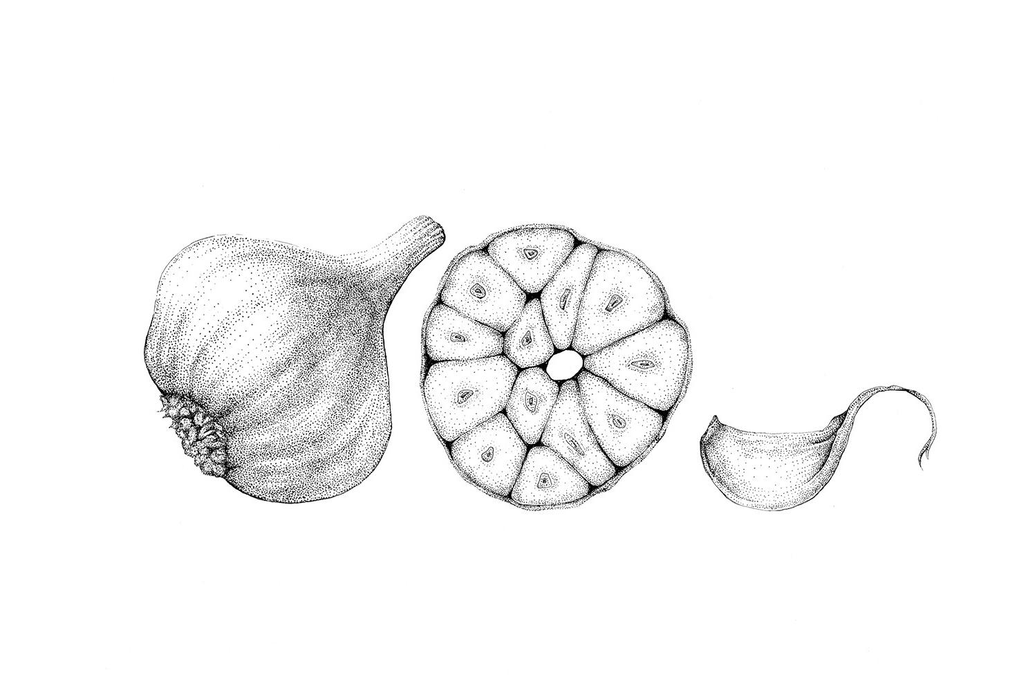 Nora - Garlic - showcase