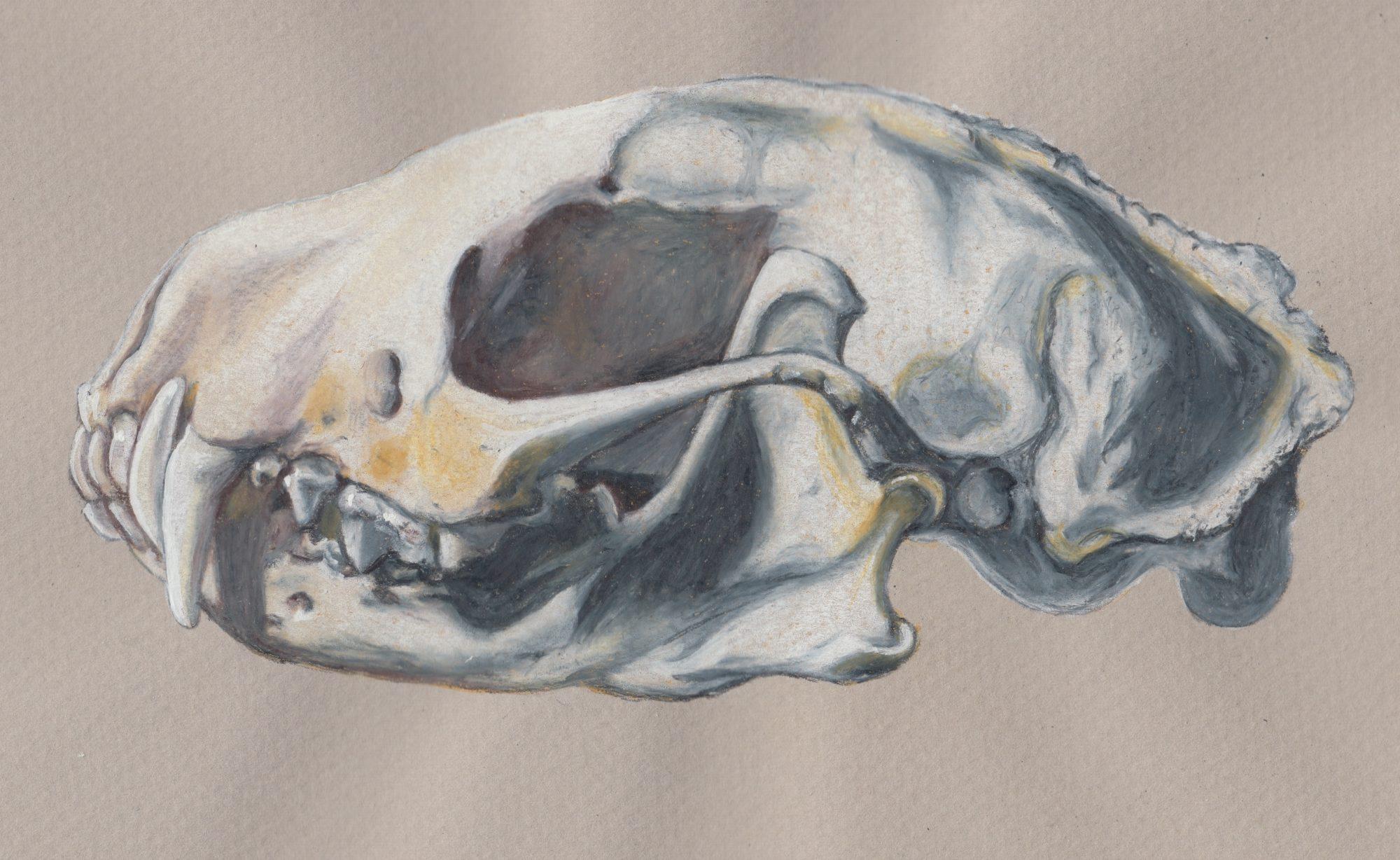 Skunk Skull copy resized
