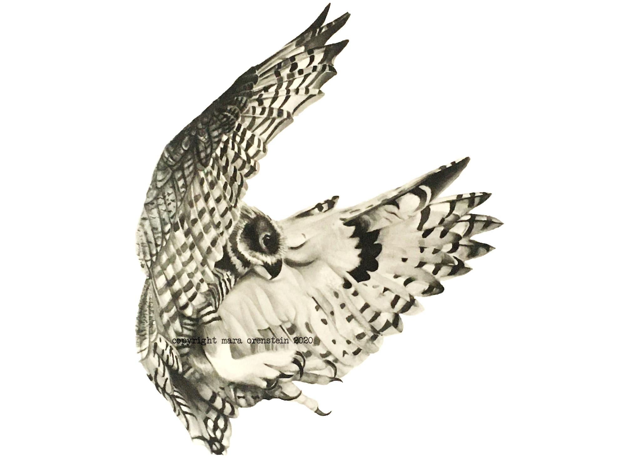 owl_finished
