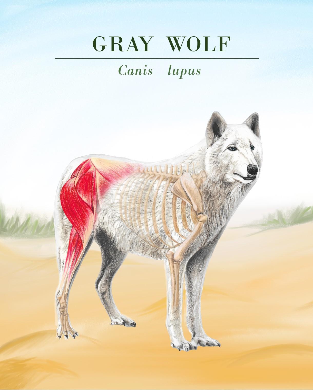 wolf 2-02